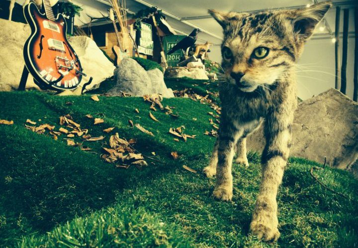 edinburgh museum of modern art wild cat display