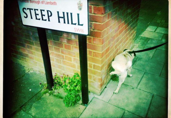 Steep Hill Lambeth Pug Dog Wee