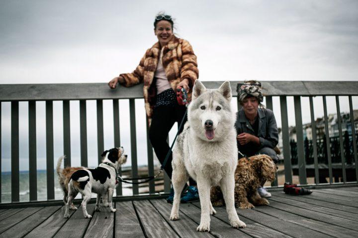 amanda-francesca-dogs
