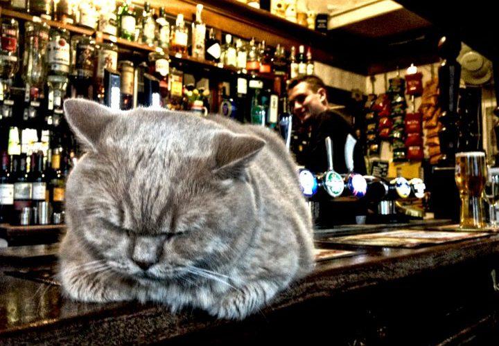 Bailey, the pub cat, Brighton