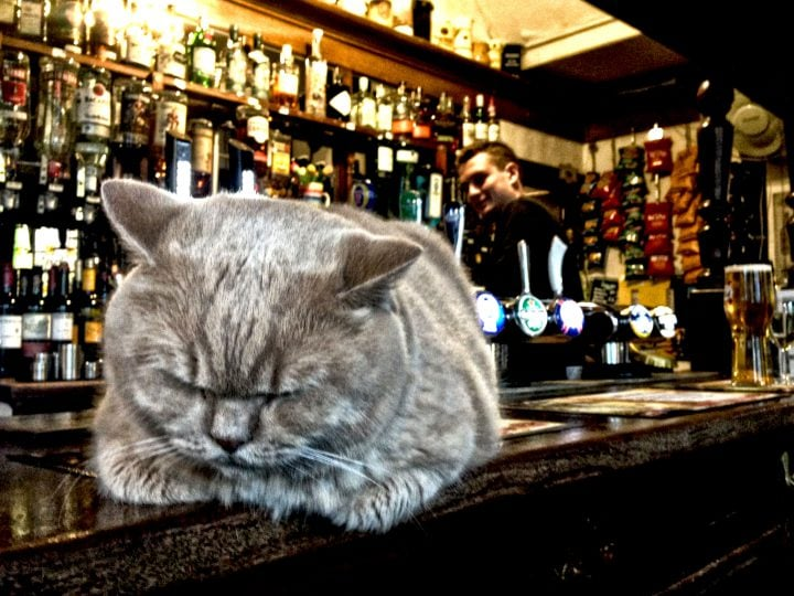 Bailey, the pub cat, Brighton